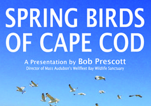 FOTL Presents: Bob Prescott on Spring Birds @ Truro Public Library | North Truro | Massachusetts | United States