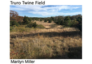 The Biodiversity of Truro's Upland Twine Field Meadow @ Truro Public Library | Dennis | Massachusetts | United States