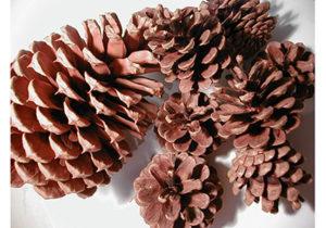 Pine Cone Flower Wreaths Workshop